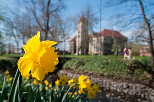 Photos of blooming flowers all over Whitman campus in Spring 2016.