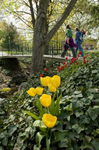 A view of spring flowers at Whitman College, as seen in April 2016.