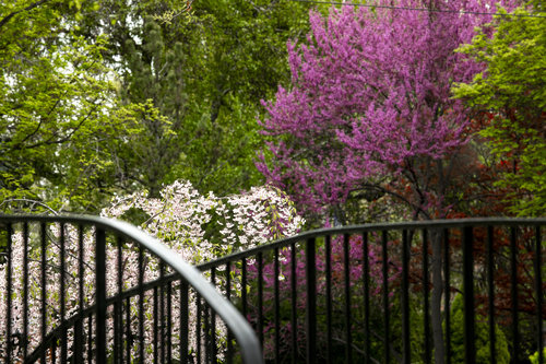 Flowers and trees bloom around Whitman's campus in spring 2019.