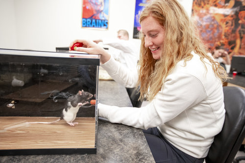 Ruby Matthews '21 works with her rat  in Professor Wally Herbranson's psychology class, practicing using classical conditioning techniques to train rats to pick up a small basketball and place it in a metal hoop. When the rats make progress, the students use a small clicker and reward the rats with a food pellet.