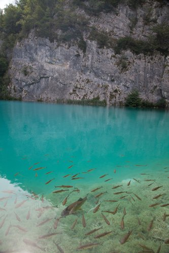 Fish in crystal clear water of Plitvice lakes. Croatia.